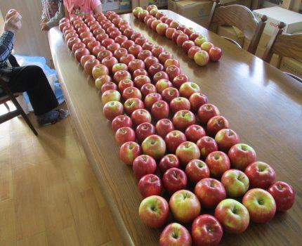 りんごをまるかじり!