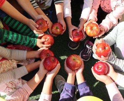 りんご まるかじり